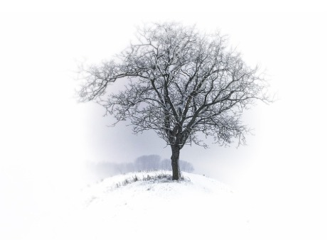Tree alone against a Winter white landscape